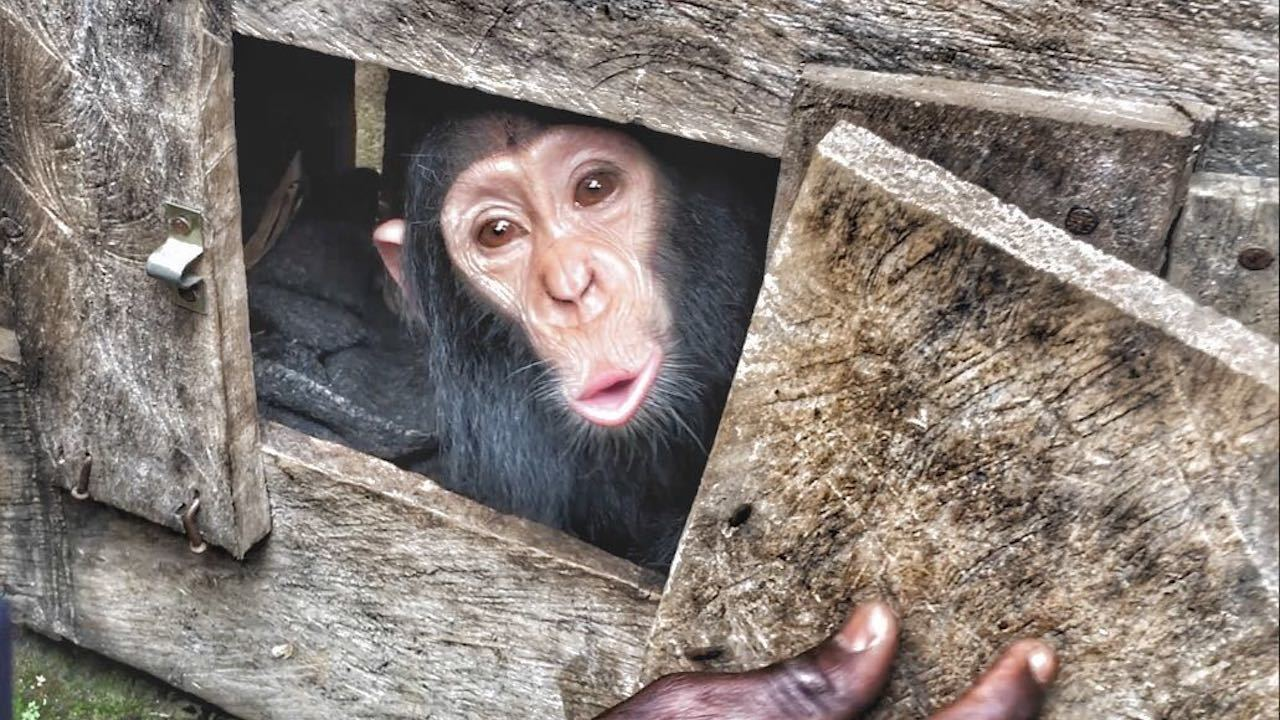 Lwiro Chimpanzee Rehabilitation Centre